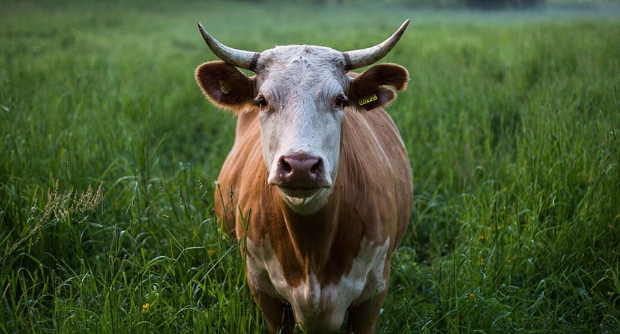 Saybrook psychologist questions the normalcy of eating meat