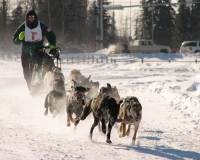 Dogsled20racing20Alaska