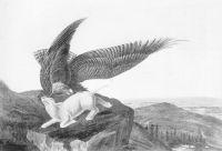 Eagle_and_Lamb_-_James_Audubon